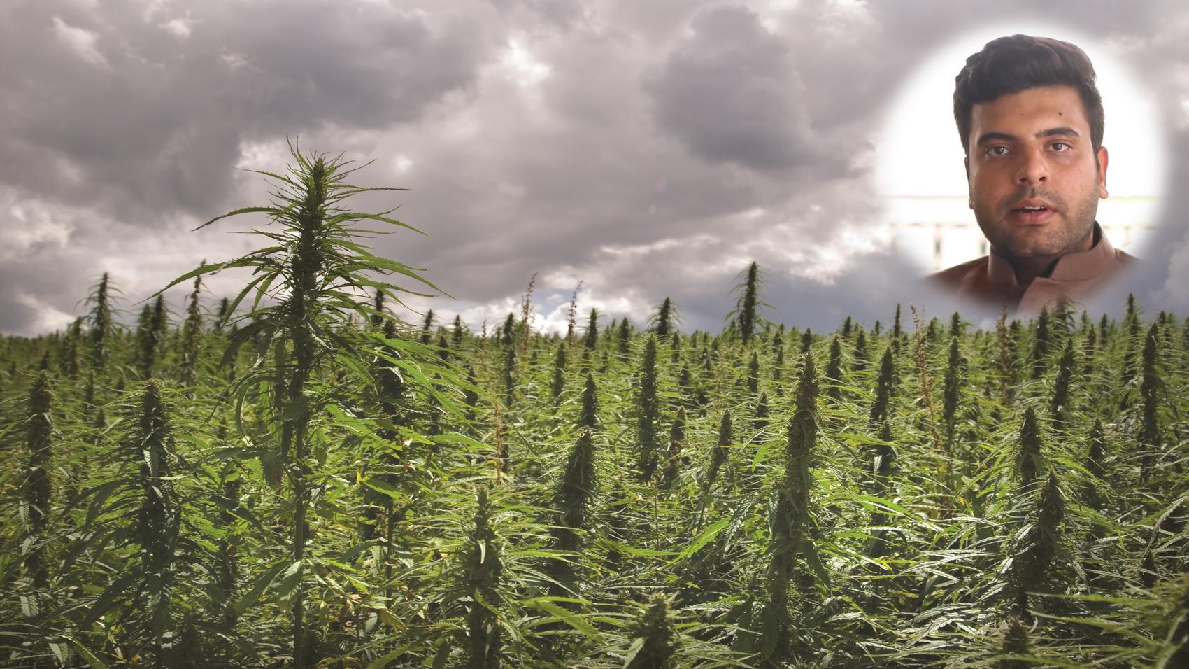 Career in Hemp Farming