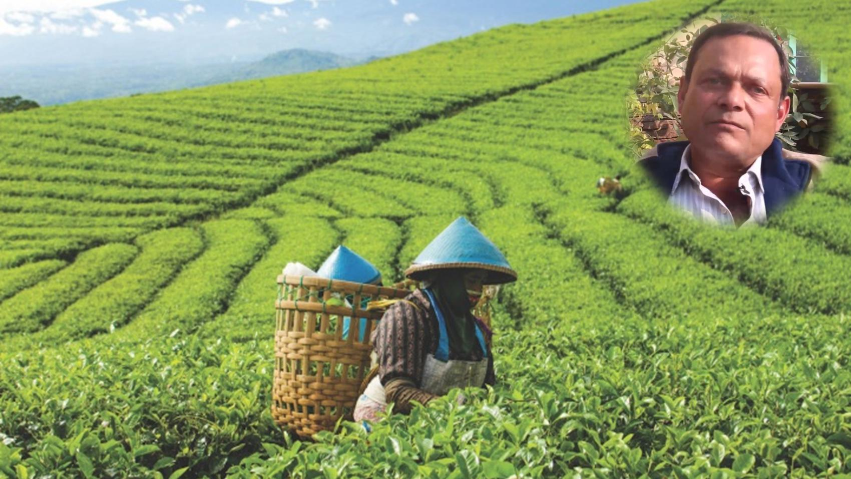 Career in Career-in-Tea-Plantation/english