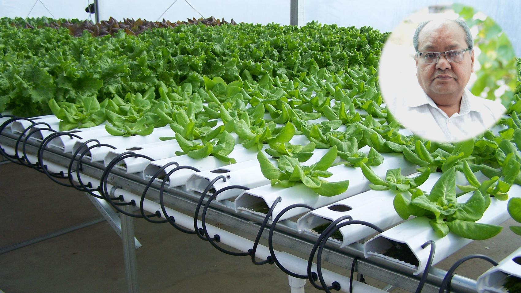 Career in Career-in-Hydroponic-Cultivation/english